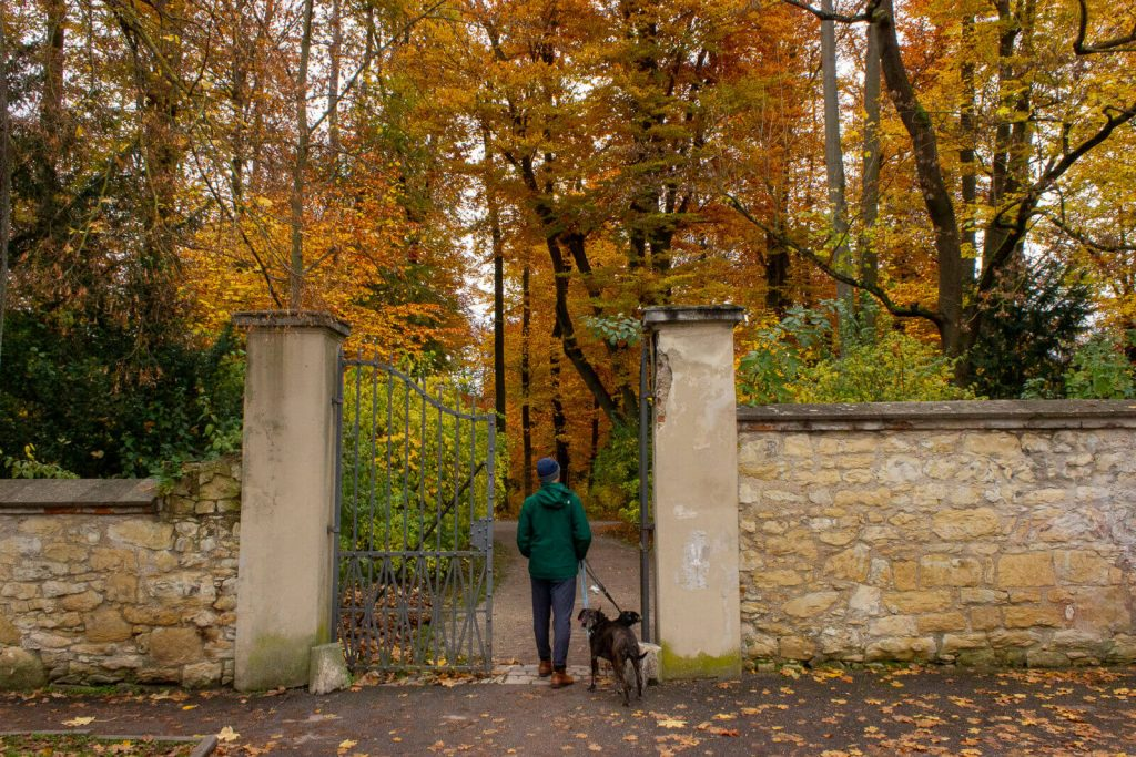 Man standing with two dogs on a leash at the entrance of a park. Fall leaves are on the trees above.