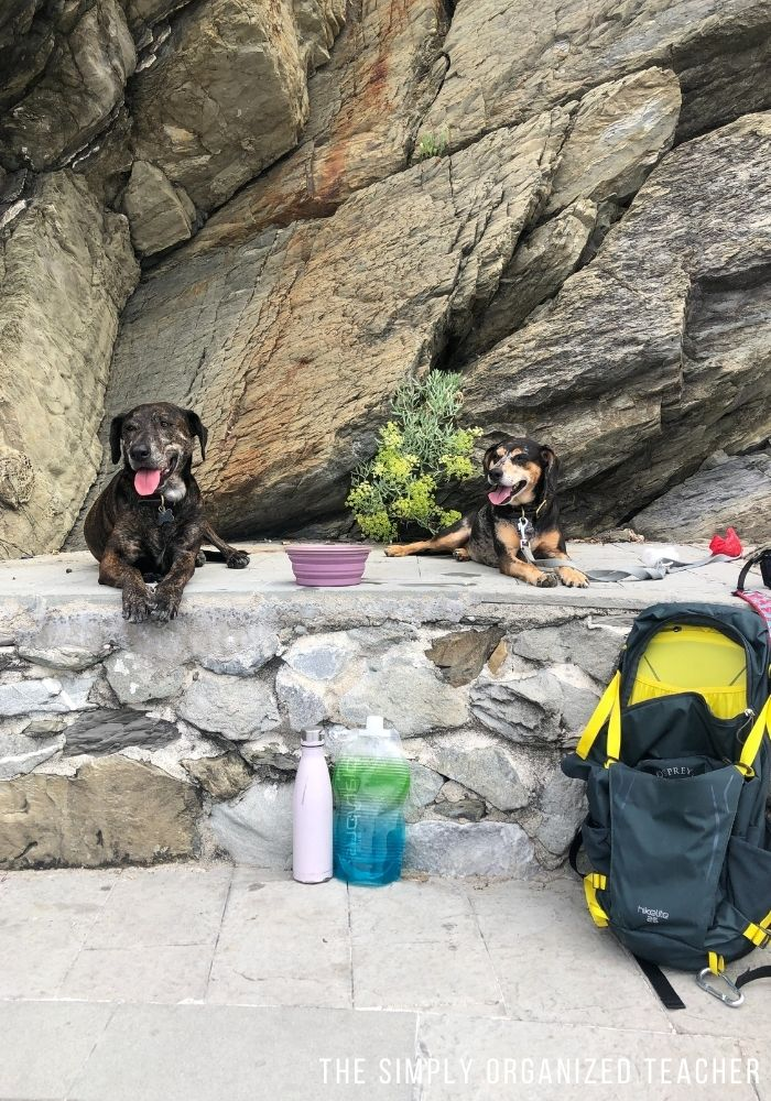 Two dogs laying on a rock ledge.