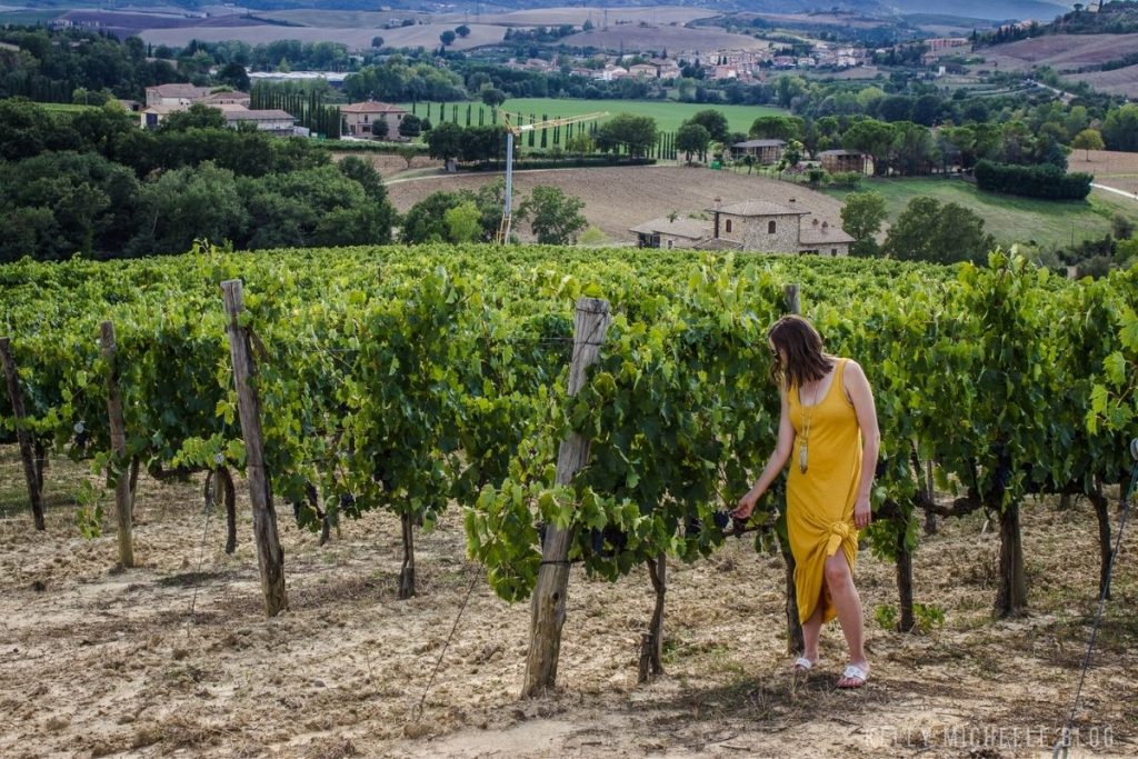 Woman picking grapes from a vineyard in Italy.